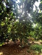 Bán Đất Vườn Giá Đầu Tư tp Long Khánh