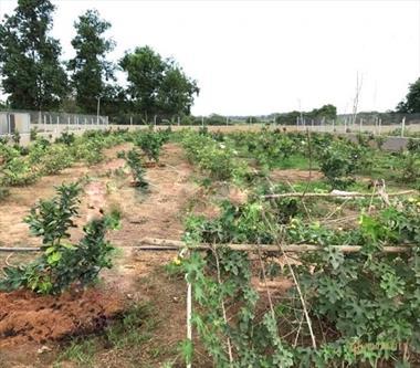 Bán lô đất vườn 990m2 giá 1tỷ3 mặt tiền Nguyễn Thị Rành, SHR công chứng sang tên ngay