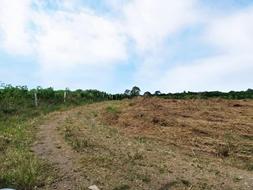 Bán nhanh hơn 3,6 sào tại Hưng Thịnh, Trảng Bom. 2 mặt tiền đường hiện hữu chỉ 750tr/sào