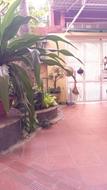 Chính chủ có căn Biệt thự sân vườn cho thuê. Vị trí: Mặt tiền đường phú lâm D, phường 10, Q6