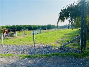 Bán lô đất vườn Củ Chi DT 537m2 giá rẻ 1ty254 SHR, cách mặt tiền đường nhựa Ba Sa 100m
