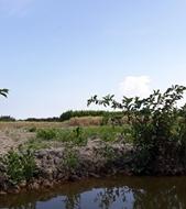 Đất cây lâu năm giá rẻ để đầu tư dài hạn