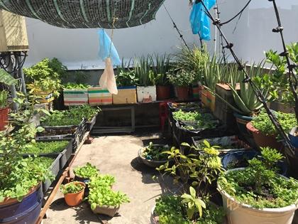 Hiếm ! ngang 8m ,Bán nhà MT Văn Cao, Quận Tân Phú,vườn cây rau củ qua trên sân thượng